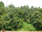 Pod těmito stromy leží císař