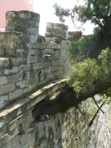 I z hradeb roste strom.