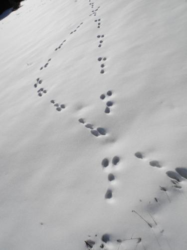 Stopy se kolem nás různě křižují. Vlastně už měsíc zde pořádně nesněžilo.