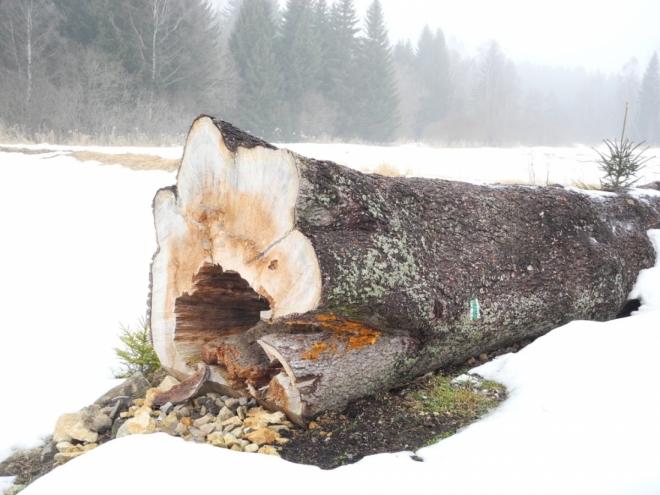 Lidé z krajiny odejdou a stromy časem zmizí...