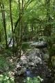 Drobný přítok řeky Tolminky, Triglavský národní park