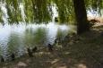 U řeky Drávy v Mariboru