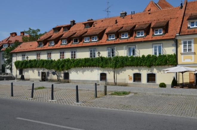 """Asi nejoriginálnější historickou památkou Mariboru je Stara trta (""""Stará réva""""), nejstarší známý živý kus vinné révy na světě."""