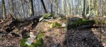Přírodní rezervace Čertova hora je chráněna pro přirozený smíšený porost dubu, lípy a buku vytvářející starý les s bohatou květenou a velkým výskytem mravenišť mravence lesního menšího a aviofauny.
