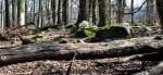 Popadané buky a balvany rozeseté po kopci dávají možnost nahlédnout do dávných dob, kdy podobně vypadala vétšina našich lesů.