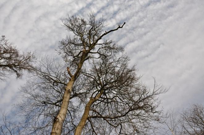 Za jakou dobu se vlastně les znovu stane krásným? Stovky semenáčků jsou jako náhrada málo. Při tomto pohledu vzpomínám i na Šumavu a její dnes bezlesé a bezcenné hřebeny, kde často nezůstal jediný vzrostlý strom. Zde se sice kácí výběrem, ale stejně pařezy mluví jasnou řečí. Never more!