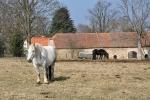 U Dědovic nás vítá několik tažných koňů.