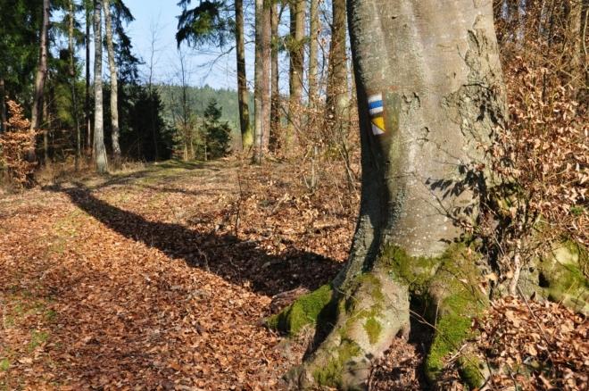 Putujeme lesem Doupata k hájovně Doupata.