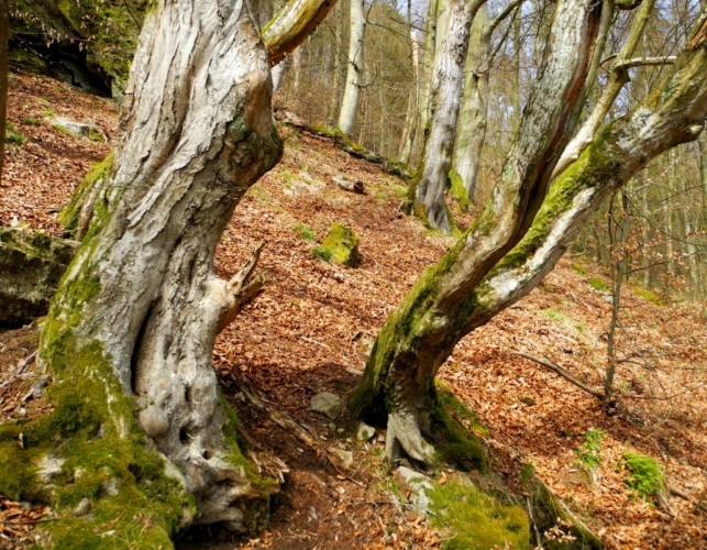 Před její mocí, kterou zdědila po dávných předcích sídlících na jejím hřbetu, se různě kroutí i staré stromy ve strmém svahu.