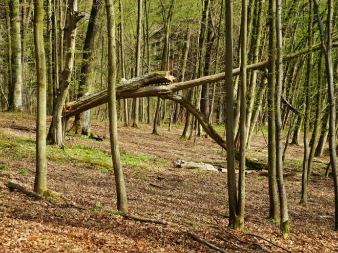 Část stezky vede vysoko nad řekou a míjí několik strží padajících rychle až k vodě.