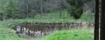 Rybníček nedaleko sedla pod Skalským vrchem. Tady již mohyly vidět nejsou.