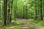 Mezi Tokem a Kapradí již jdeme bukovÿm, čerstvě zeleným lesem.