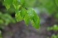 Nostalgie... Nemusí být stále krásně a přece je stále co objevovat. Projít mezi mokrým listím mladých stromů bučin je obzvlášť osvěžující.