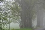 Lidi odejdou, stromy zůstávají. Památná 30m vysoká lípa.