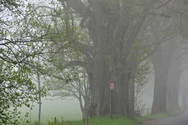 Lidi odejdou, stromy zůstávají. Památná 30 m vysoká lípa.