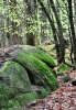 Kamenů a skal je zde, na rozdíl od nedalekých Českých Žlebů, málo.