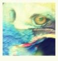 Kasuár přilbový či kasuár jižní je velký pták a typický představitel rodu Casuarius, který obývá tropické deštné lesy v severovýchodní Austrálii, východní Indonésii na Nové Guinee a na ostrovech Aru a Seram, se fotit se moc nechtěl. Takže je z toho umělecké foto.