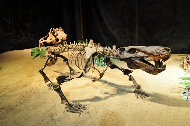 Dinosaurinárium sice bylo za 350,- Kč, ale jsem rád, že jsem zkameněliny dinosaurů viděl na vlastní oči. Tahle část historie Země je fascinující. Jako by to ani nebyla pravda...