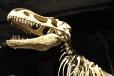 Tyranosaurus Rex je největším tahákem.