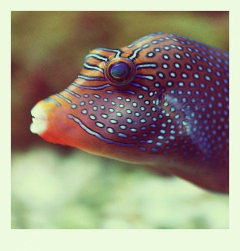 Mořský svět nás nalákal, když jsme zjistili, že po otravě a úhynu všech ryb ve velkém akváriu jsou zde již nové. Zavzpomínal jsem na Mořské akvárium v Barceloně a musím uznat, že i v Praze se snaží. Jen byl problém s osvětlením a pohybem rybek. Tedy aspoň pro můj fotoaparát. I proto jsem nakonec zvolil převod fotek filtrem Polaris a předkládám je v rámečku bez komentářů.
