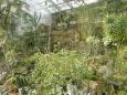 Pohled na polopouštní část skleníku. Zde ještě není moc vedro a vlhko.