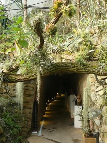 Tunelem dojdeme pod jezírko, respektive doprostřed něj a pak vylezeme do tropické části.