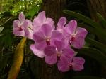 V tropické části už vidíme orchideje.