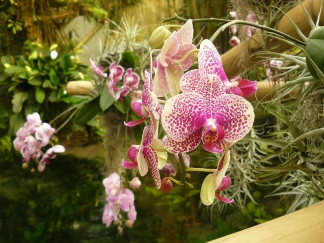 Orchideje nad jezírkem