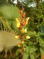 Tato květina (výjimečně ne orchidej) visí ze stropu na dlouhé liáně.