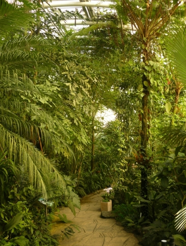 Stezka uprostřed tropické části