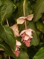 Některé květy či spíše květenství jsou opravdu zvláštní