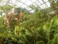 Horská část skleníku