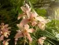 I v horské části skleníku mají orchideje