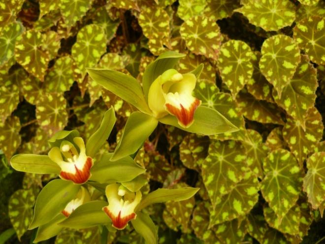 Rostliny v tůňce plavoucí jako lekníny