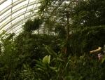 Tropická část skleníku