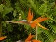 Některé květy vypadají jako origami