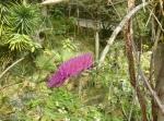 Květenství v polopouštní části