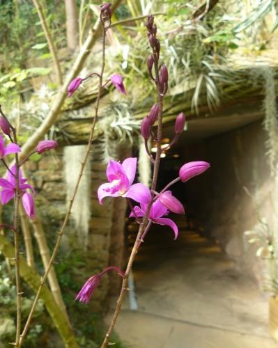Opět jdeme tunelem do tropické části, kde na nás čekají motýli