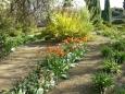 Tulipány rozličných barev v ornamentální zahradě