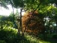 Do červena zbarvený strom v pozdně odpoledním slunci