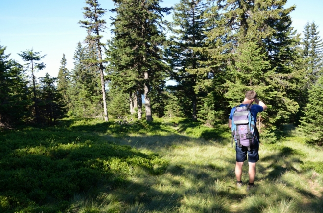 Vytoužená rovina těsně pod 1500 metry. Jak je pro Pohorje typické, lesy pokrývají i nejvyšší části hřebene, porost je však místy dost řídký na to, abychom se konečně mohli pokochat okolní krajinou.