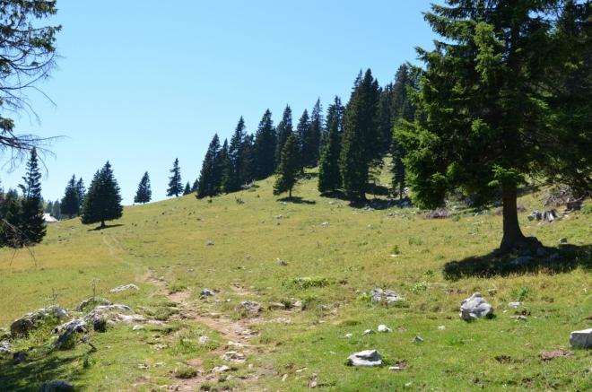 Krátký výšlap nás dostal z parkoviště nad hranici souvislého lesa. Dál je terén již jen lehce zvlněný, a i když celkově stále stoupáme, jde v zásadě o pohodovou vycházku. Z původně jižního směru se postupně stáčíme na západ.