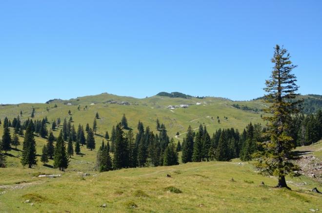 Zelený dvojpahorek na obzoru je Gradišče, nejvyšší vrchol planiny (1666 m), pod ním už částečně vidíme největší místní osadu, zvanou nečekaně Velika Planina. Právě tam, na západním okraji, bude naše trasa napříč planinou končit, teď jsme v centrální části.