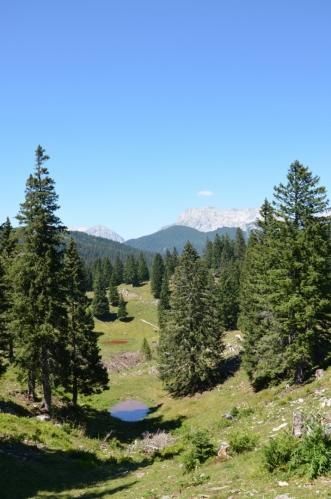 Velika Planina je známá též výhledy na severněji ležící hlavní hřeben Kamnicko-Savinjských Alp, od něhož ji dělí jen jedno údolí. Zde v pozadí vidíme místo, kde Kamniško sedlo (1884 m) rozsekává tento hřeben zhruba na dvě poloviny.