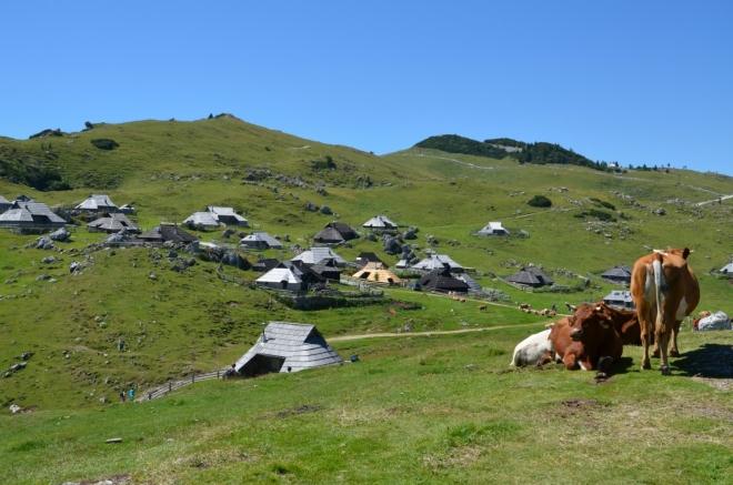 Údajně není problém ochutnat přímo od pastevců místní produkty, v některých obydlích lze též přenocovat.
