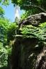 Kohout (871 m n. m.) je kompletně zalesněný. Je škoda, že když už ho hyzdí stožár operátorů, není zde rozhledová plošina. Trochu by otupila tupost těch, co rozhodli o této stavbě, která je přímo mezi dvěmi vrcholovými skalami.