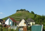 Hora s vinicemi nad Weinsbergem