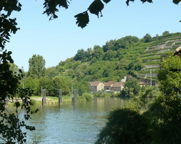 Řeka Neckar u Gundelsheimu