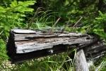 Příčná cesta zřejmě byla železnou oponou. O tom svědčí její šířka, úpravy okolí a hlavně spousta tlejících kůlů.