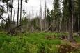 Lesy v okolí se zatím kůrovci ubránily, ale jak je vidět nemusí být všem dnům konec.